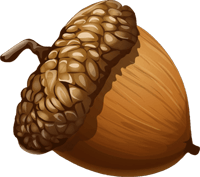 cartoon acorn with transparent background